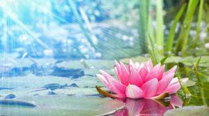 mantra modena meditazione bhajan yoga armonia