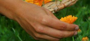 yoga modena meditazione alimentazione fitoalimurgia